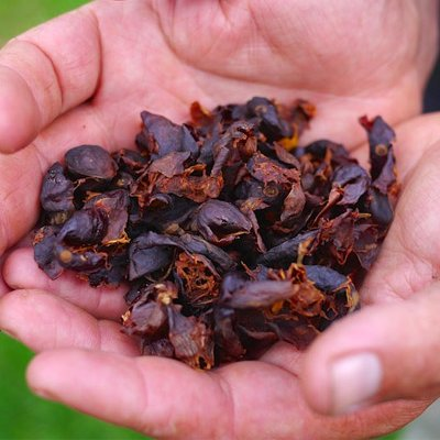 CASCARA, COLOMBIA